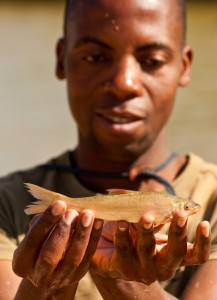 Clanwilliam sandfish (Labeo seeberi) survey - part of The Cape Critical Rivers Project © Bruce Paxton
