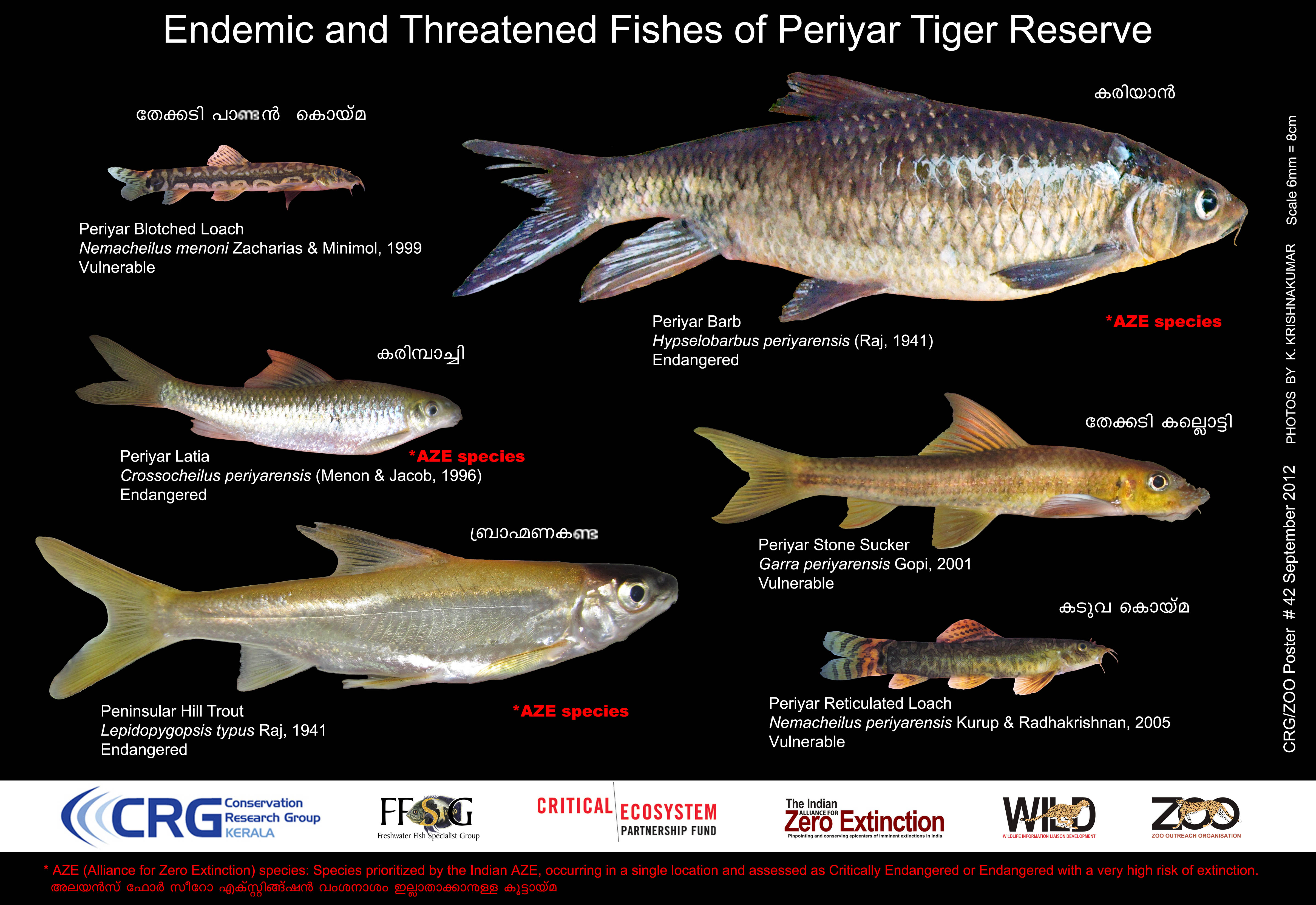 The FFCNSA  provided technical advice for this educational poster on the endemic and threatened fishes of the Periyar Tiger Reserve. Click on the poster for more details.
