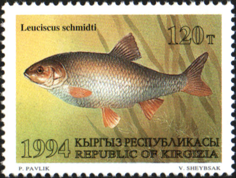 Schmidt's dace on a Kyrgyzstan stamp