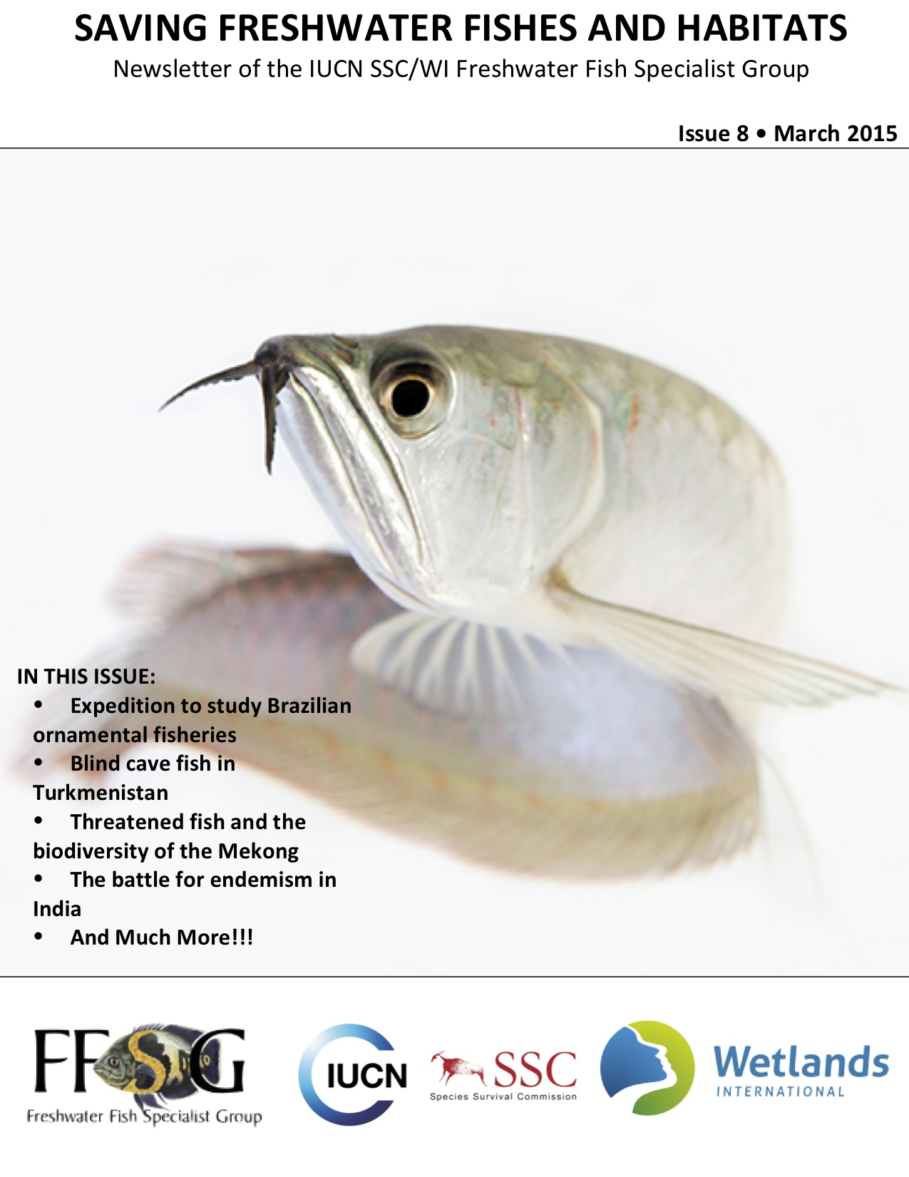 Freshwater fish in malaysia - March_ffsg_newsletter_cover Saving Freshwater Fishes And Habitats