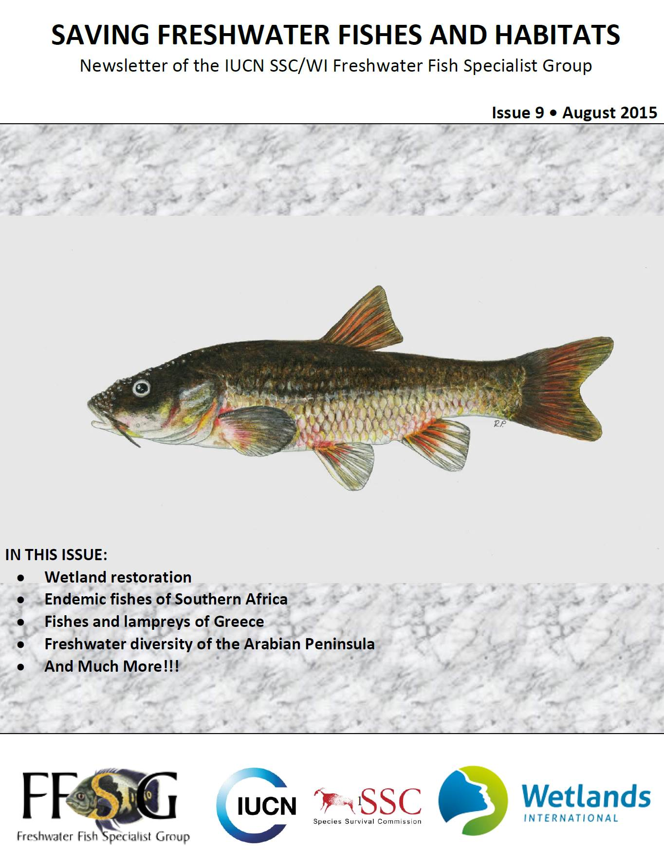 Freshwater fish in malaysia - August_ffsg_newsletter_cover Saving Freshwater Fishes And Habitats